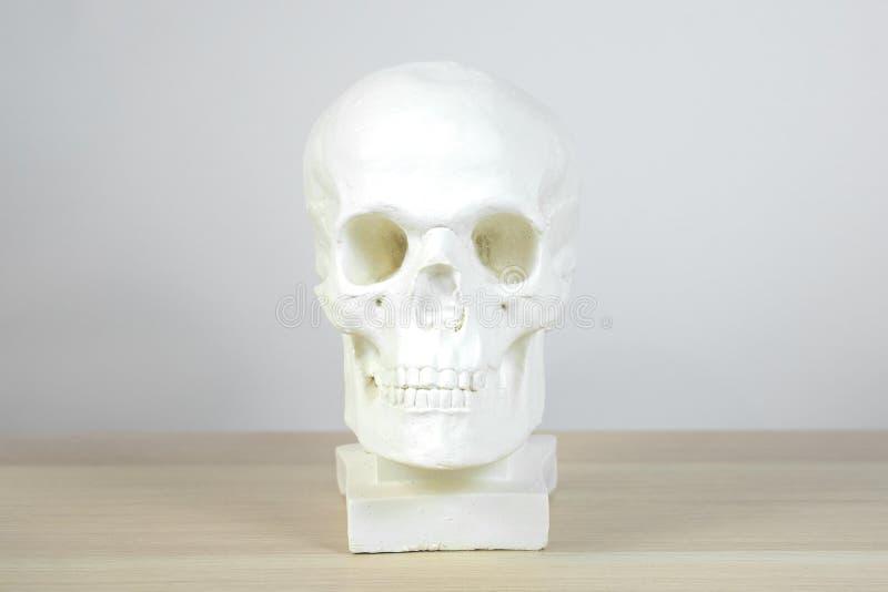 Cranio anatomico del gesso, busto, scultura sui precedenti leggeri sulla tavola fotografie stock libere da diritti