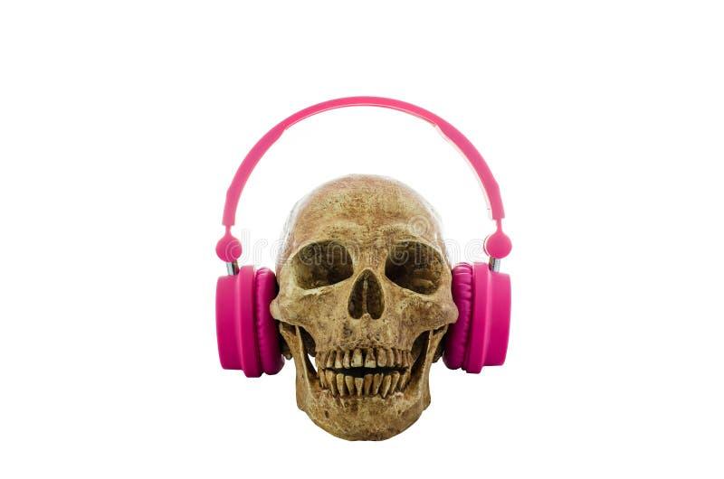 Cranio con le cuffie rosa isolate su fondo bianco immagini stock