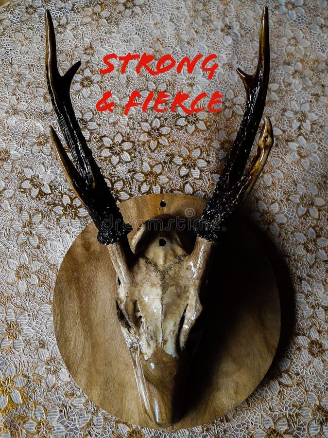Cranio dei cervi che si siede sulla tavola fotografie stock libere da diritti
