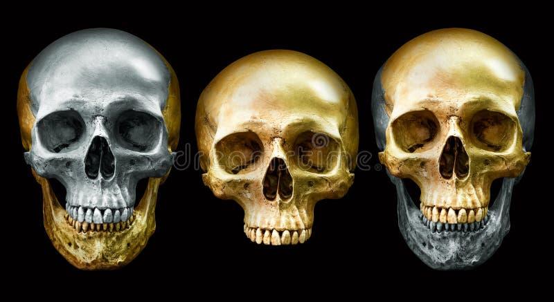 Cranio del metallo e dorato fotografia stock