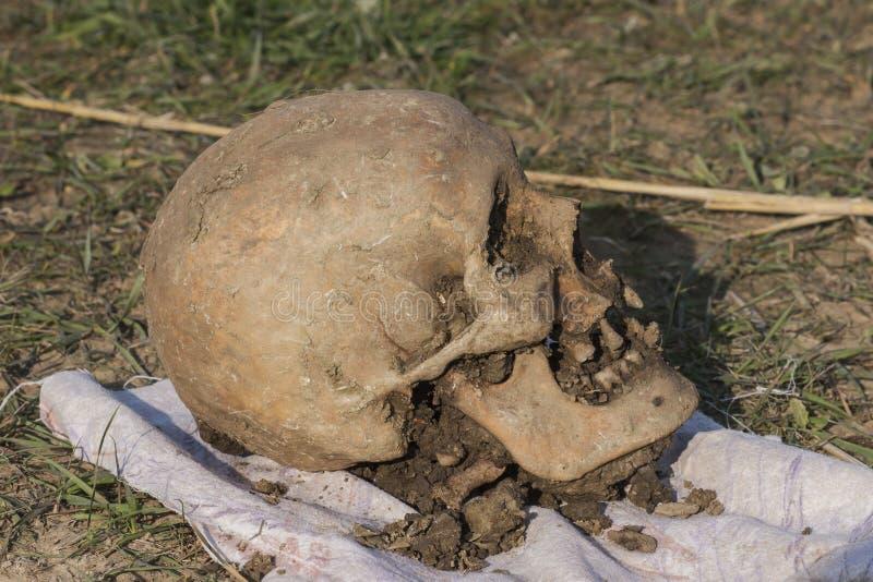 Cranio di una donna di Nogai scavo immagine stock