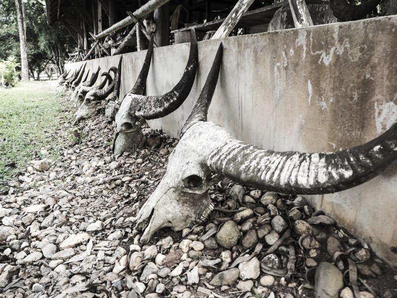Cranio di uno scheletro di fotografie stock libere da diritti