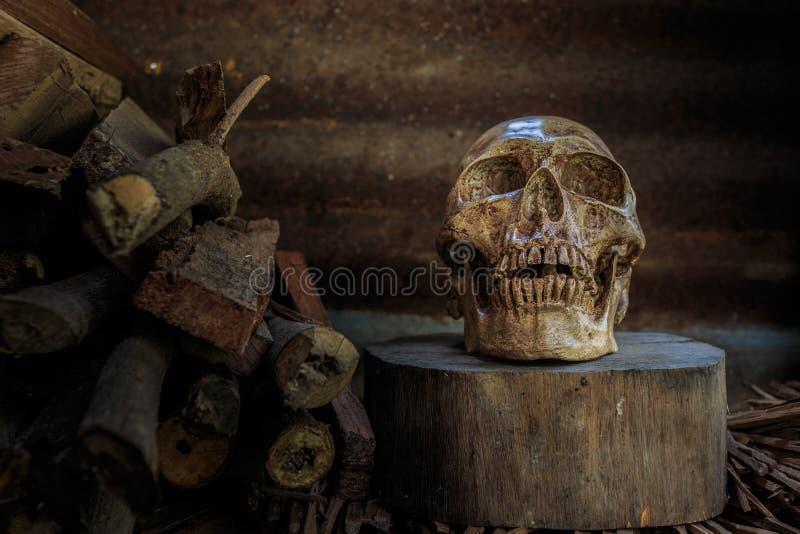 Cranio e legna da ardere di natura morta immagine stock libera da diritti