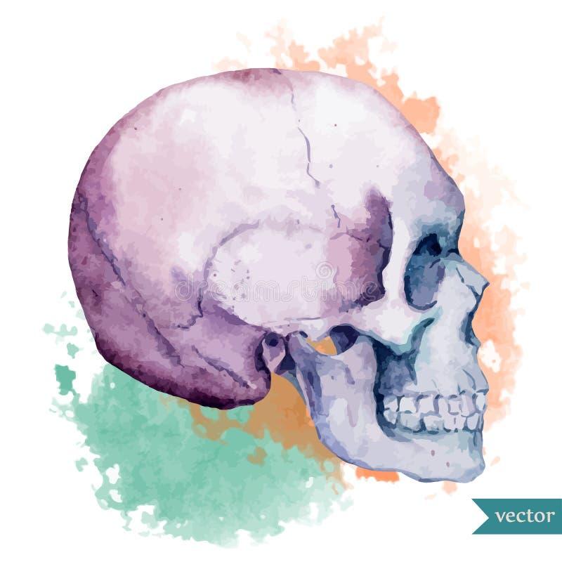 Cranio piacevole royalty illustrazione gratis