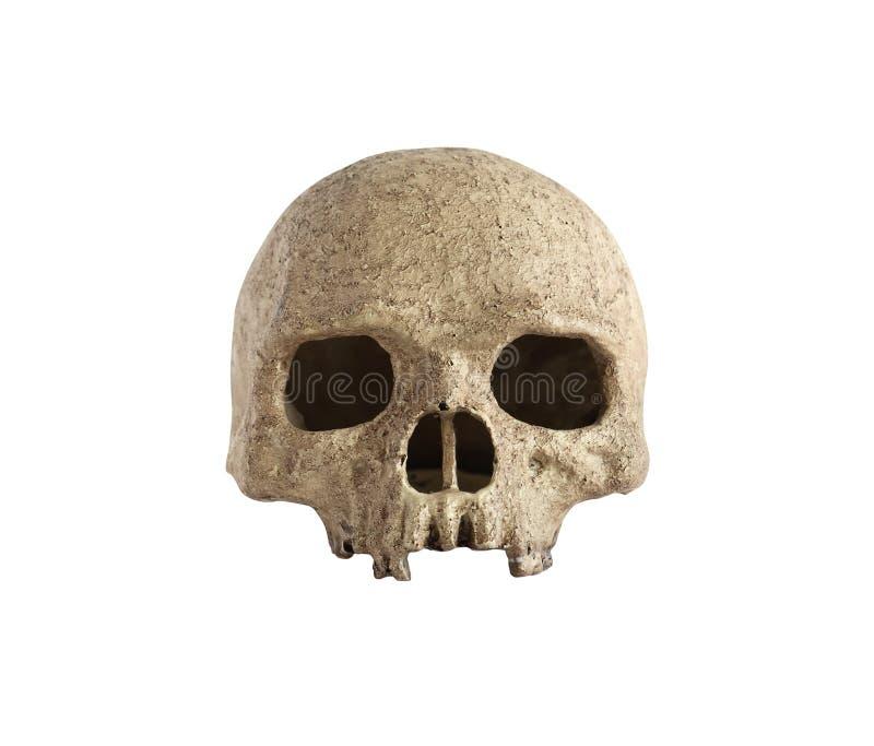 Cranio su bianco immagine stock