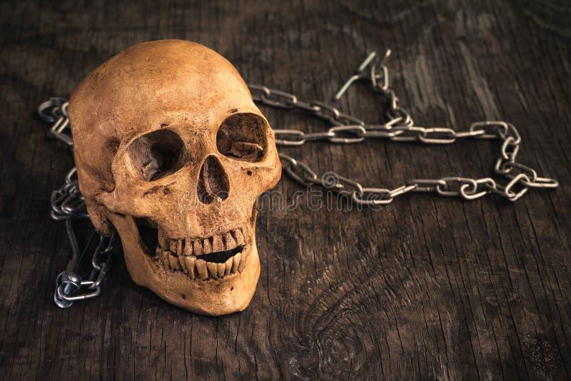 Cranio su un vecchio fondo di legno, cranio umano fasullo sulla f di legno fotografia stock