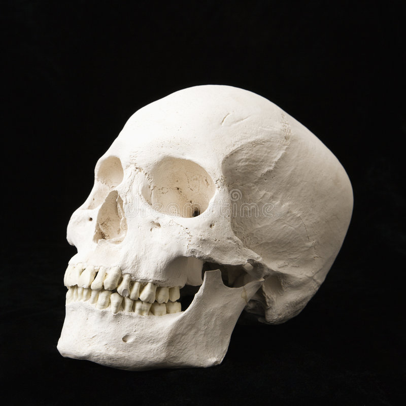 Cranio umano. fotografie stock