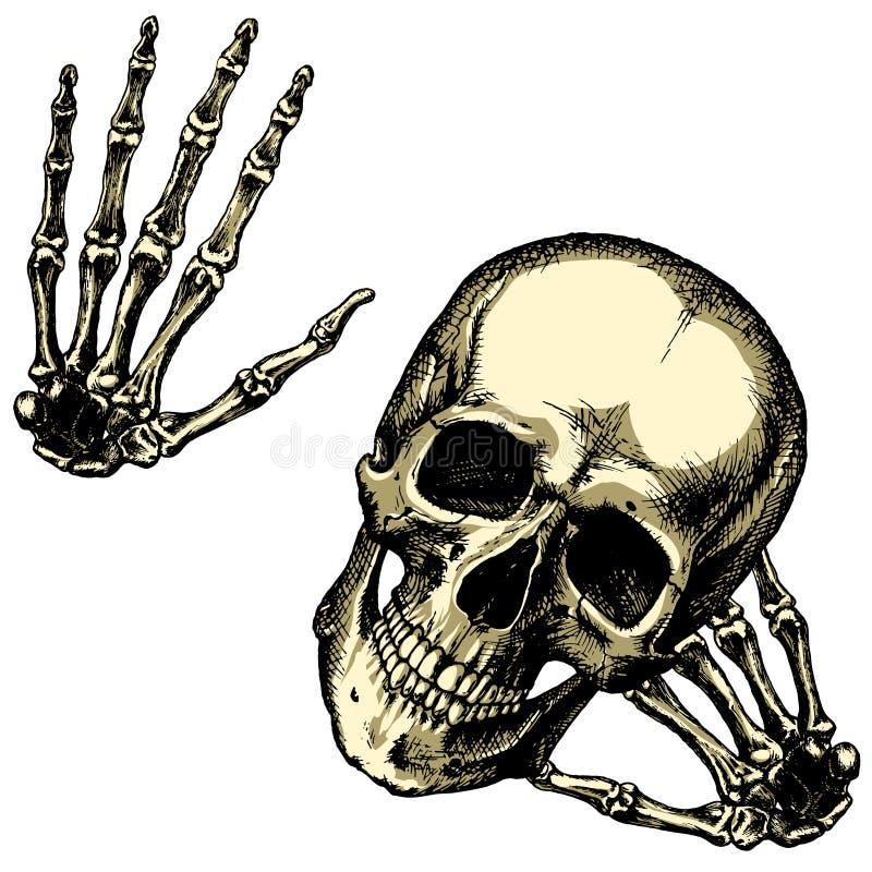 Cranio umano amichevole con le vostre mani su un fondo in bianco royalty illustrazione gratis