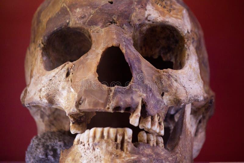Cranio umano con fondo scuro Concetto della morte, dell'orrore e dell'anatomia Simbolo spettrale di Halloween fotografia stock