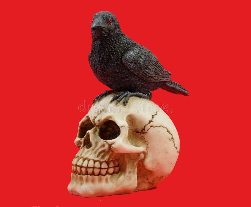 Cranio umano con il corvo sulla cima fotografia stock