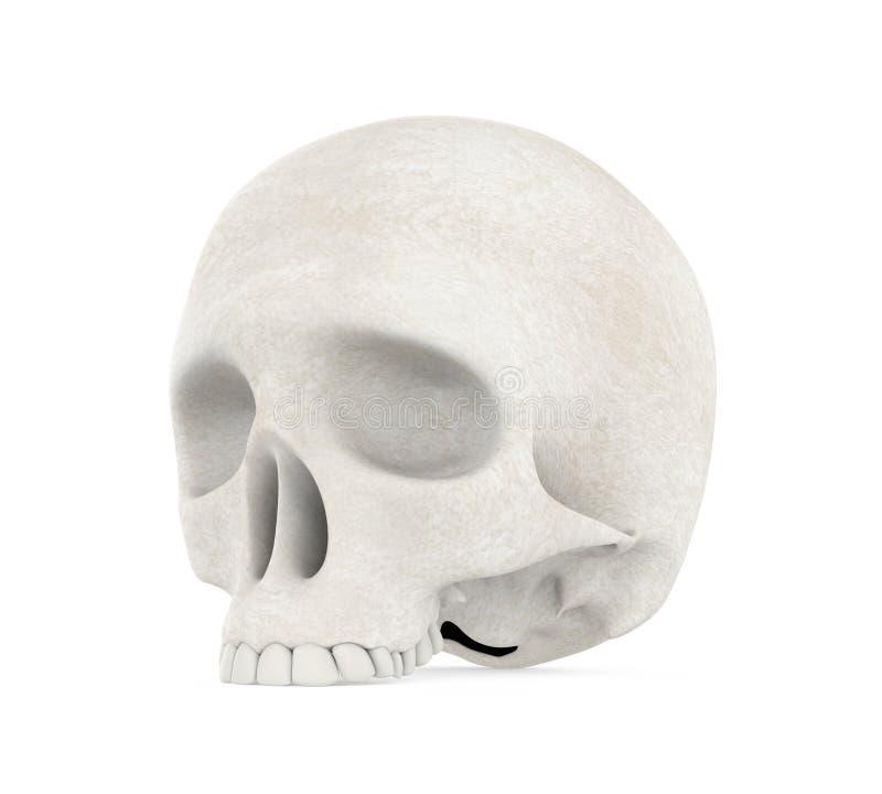 Cranio umano isolato illustrazione vettoriale
