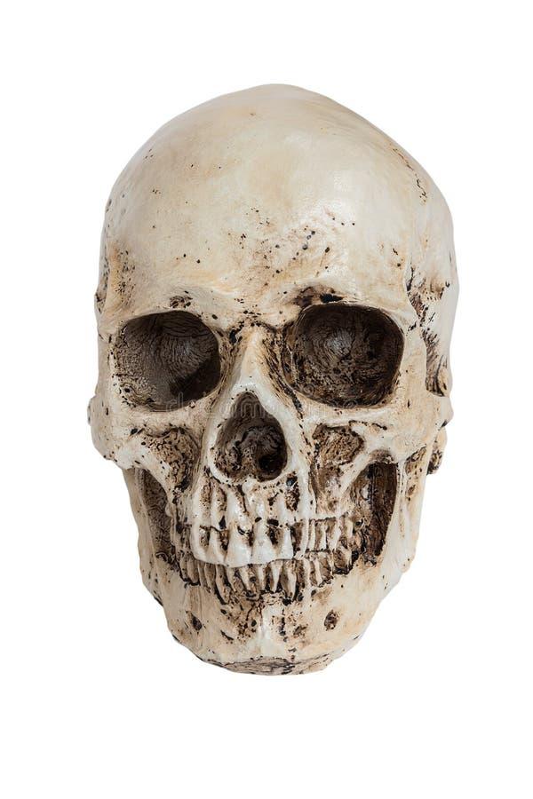 Cranio umano isolato su bianco immagini stock