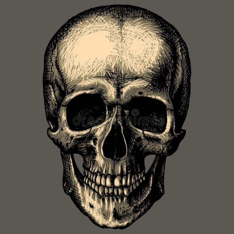 Cranio umano sopra l'incisione grigia del fondo illustrazione di stock