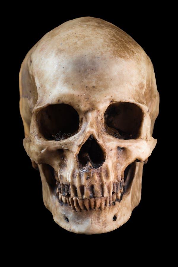 Cranio umano su priorità bassa nera fotografie stock libere da diritti