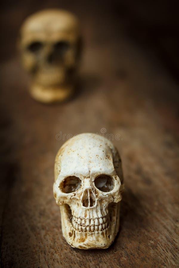 Cranio umano su vecchio fondo di legno fotografia stock