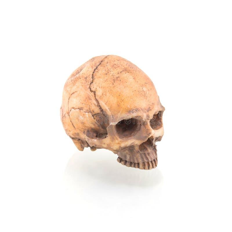Cranio umano sull'isolato su immagine stock libera da diritti