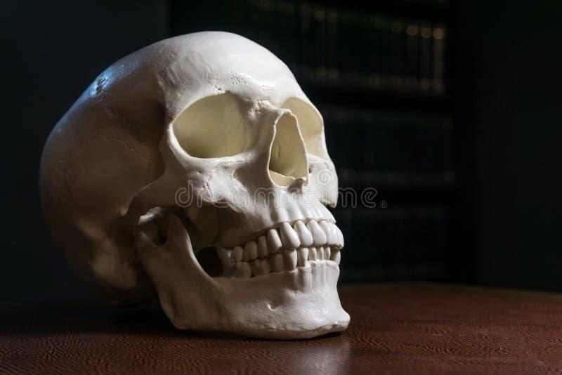 Cranio umano sulla tavola immagini stock libere da diritti