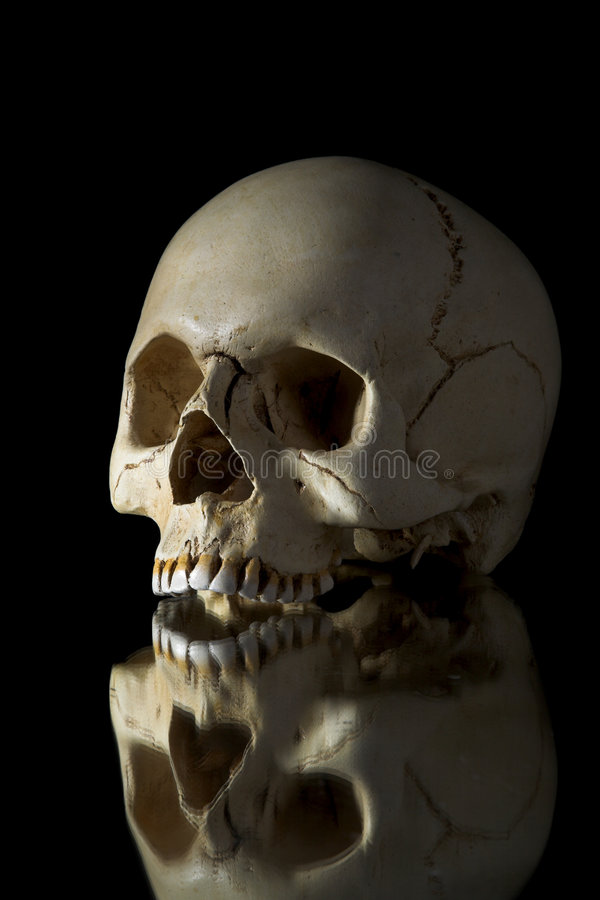 Download Cranium stock image. Image of human, ancient, dead, isolated - 2153665