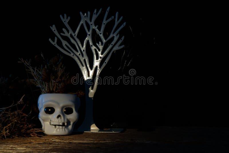 cranium fotografia de stock