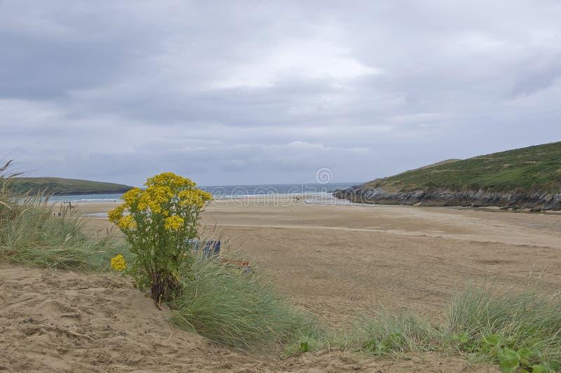 Download Crantock Beach stock photo. Image of plant, britain, view - 32935072