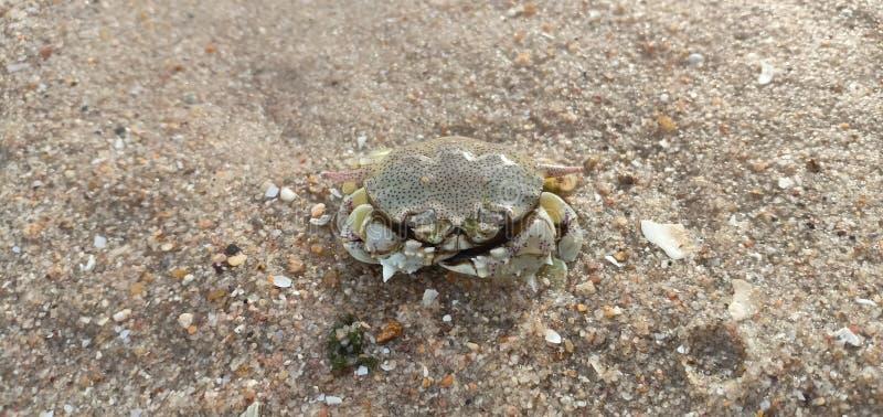 Crap op zand stock foto