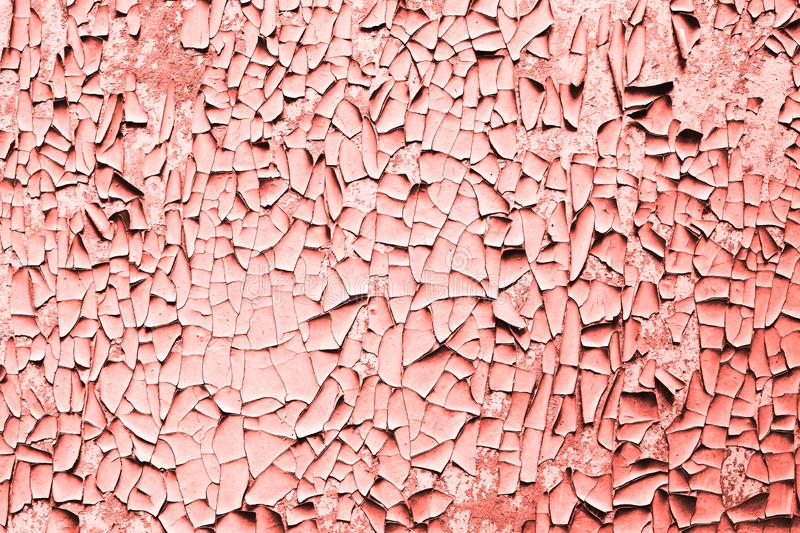 Craquelure of coral paint. Texture. Trendy coral color of 2019 royalty free stock photo