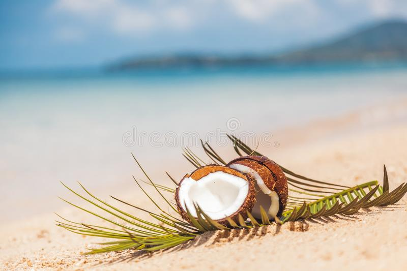 crashed coconut in the sand on the shore of a warm tropical sea, rest and travel concept, healthy food stock photo