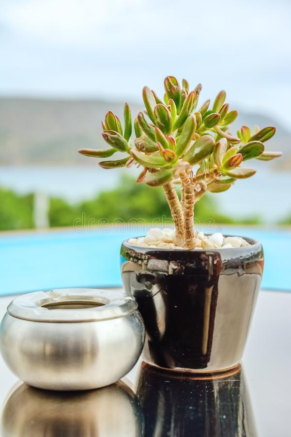 Crassula in a pot and ashtray against the sea. Green crassula in a ceramic pot and a silvery metallic ashtray on a table against a blue pool and sea landscape stock image