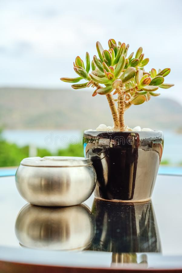 Crassula in the pot and ashtray on the table. Green crassula in a ceramic pot and a silvery metallic ashtray on a round table against a blue sky and sea royalty free stock photography