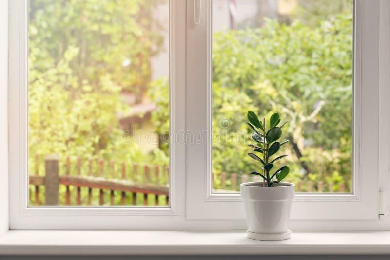 Crassulabloem in pot op vensterbank stock afbeelding