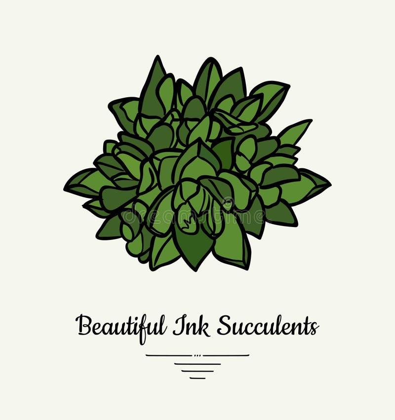 Crassulahand getrokken succulente vector ge?soleerde illustratie Het moderne embleem van de inkt succulente installatie, pictogra stock illustratie