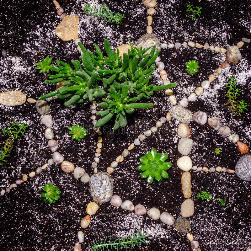 Crassulaovata Hobbit en succulents in bloempot met tuinstenen stock fotografie