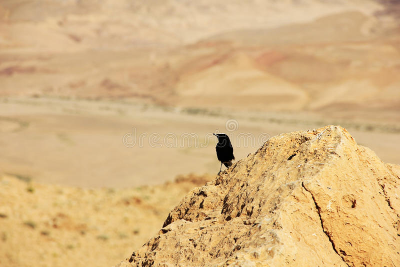 Cratère de désert du Néguev et de Ramon images stock