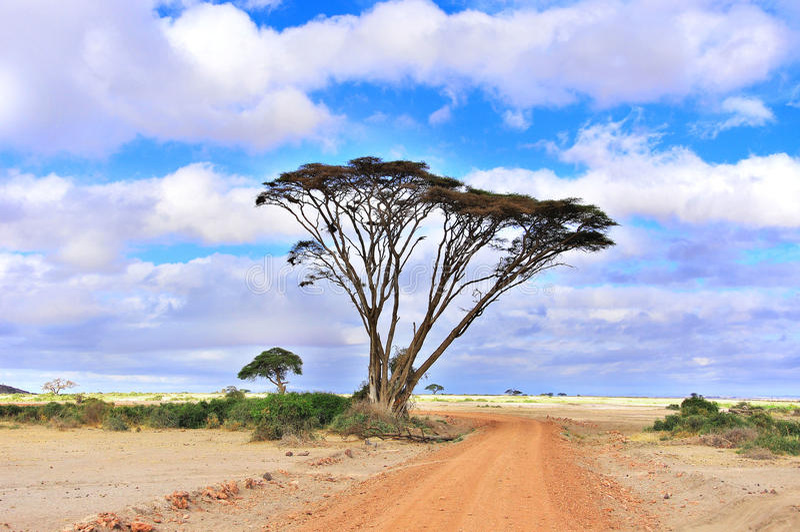 Cratère Ngorongoro photographie stock