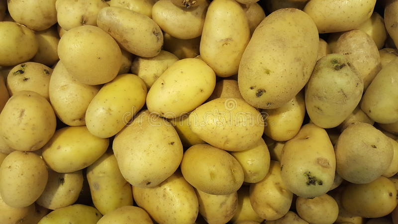 Crate abundance of yellow potatoes royalty free stock images