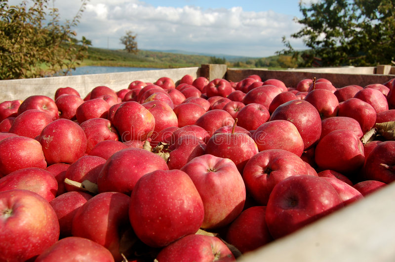A crate of apples stock photos