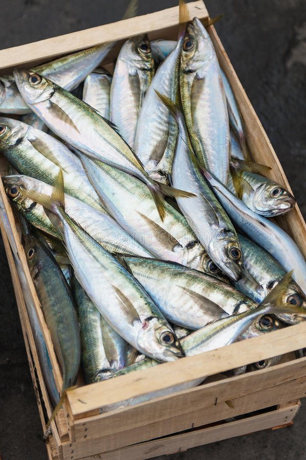 Crate of fresh fish royalty free stock photography