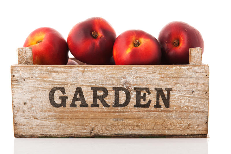 Crate nectarines. Wooden garden crate nectarines isolated over white background royalty free stock photography