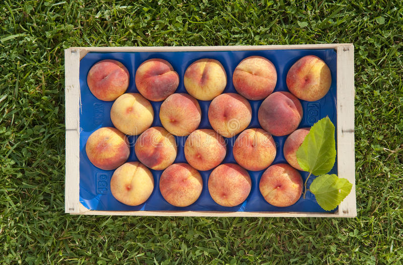 Download Crate of peaches editorial stock photo. Image of down - 23703038