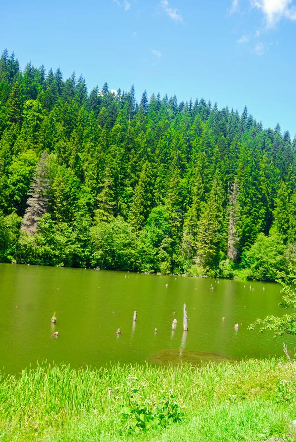 Lake Sfânta Ana. The only crater lake in Romania located in the volcanic crater of the volcano named Ciomatu Mare of the Eastern Carpathians, near Tușnad royalty free stock images