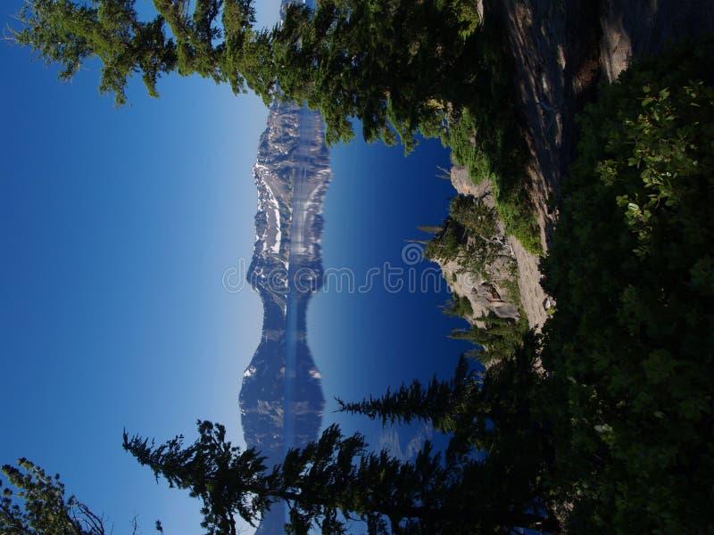Crater Seebäume stockfoto