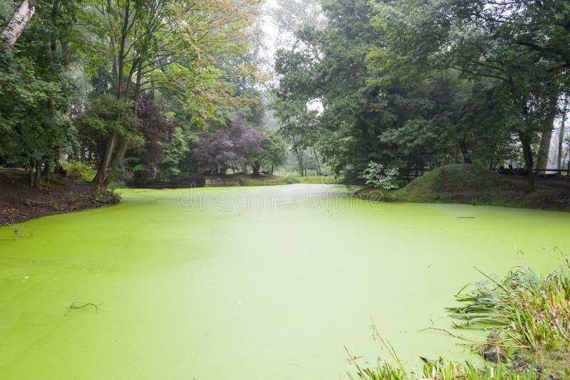 A cratera da primeira guerra mundial encheu-se com água verde fotos de stock