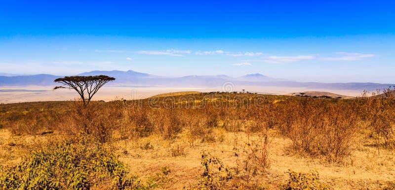 Cratera de Ngorongoro em Tanzânia fotografia de stock royalty free