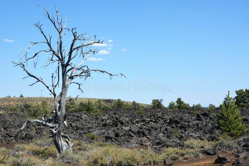 Crateras da lua fotos de stock royalty free