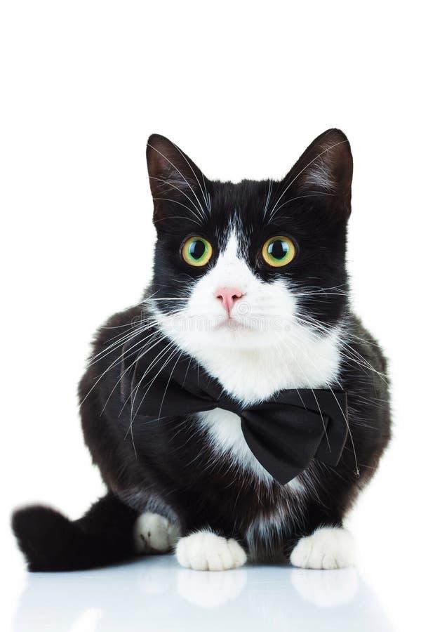 Cravatta a farfalla d'uso del gatto in bianco e nero elegante fotografie stock