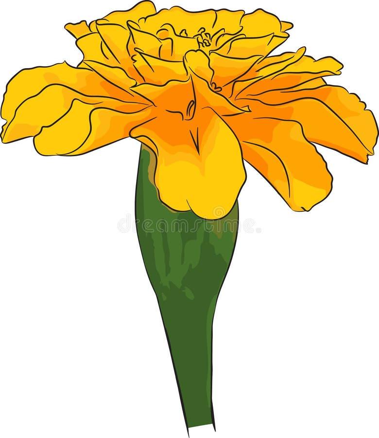 Cravos-de-defunto amarelos imagens de stock royalty free