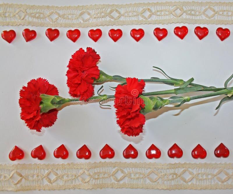 Cravos vermelhos em um fundo branco foto de stock