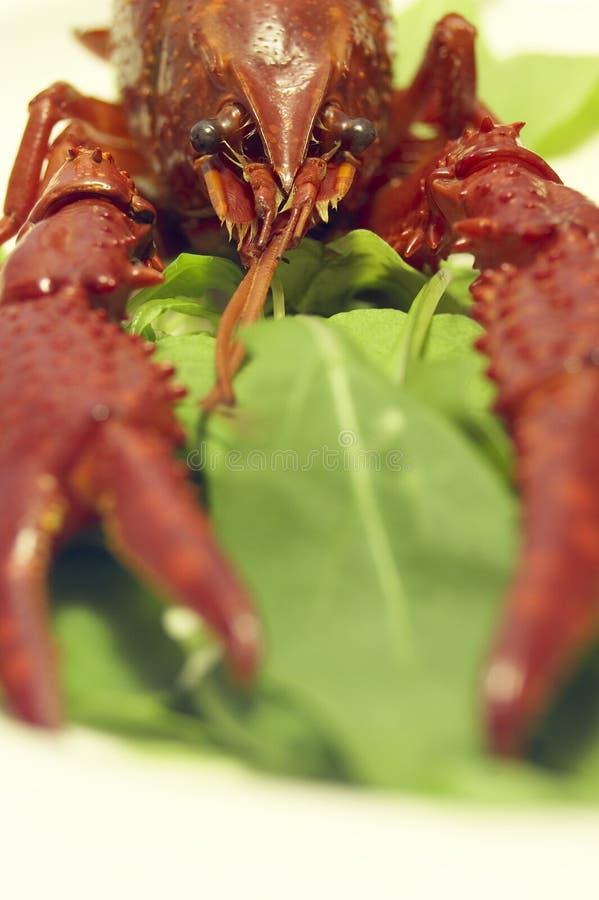 Free Craw-fish Stock Images - 377394