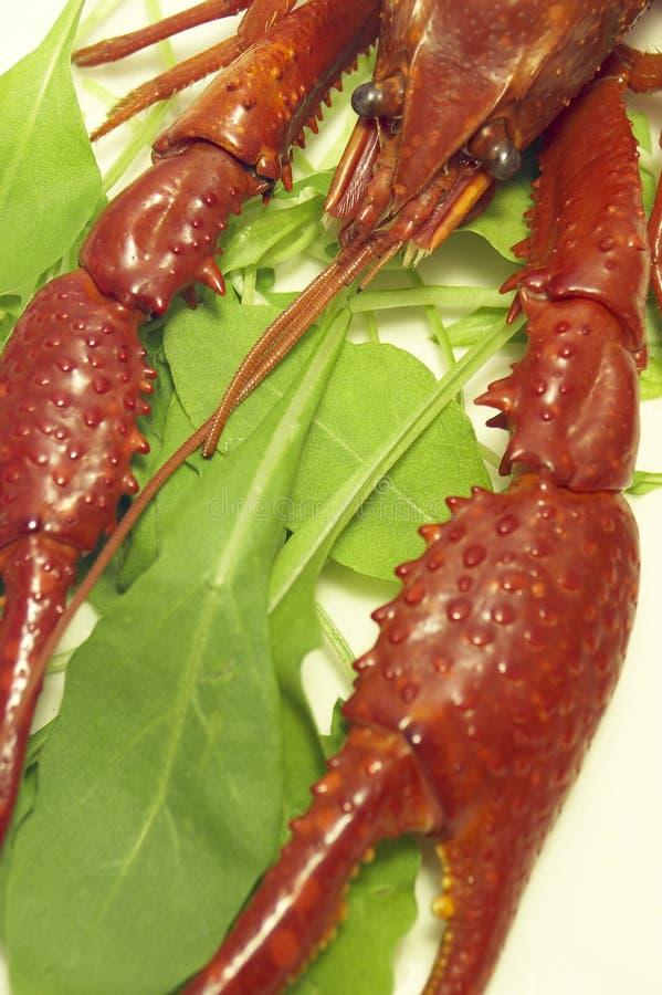 Free Craw-fish Royalty Free Stock Photo - 377395