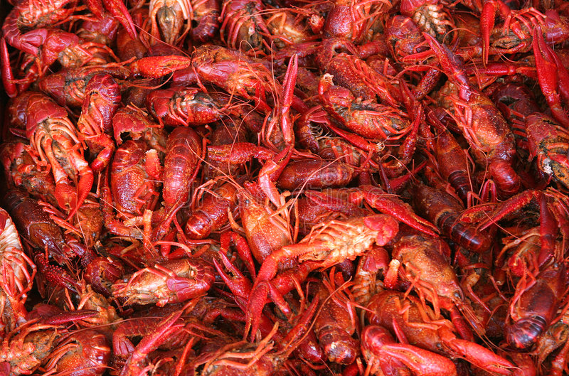 Crawfish. Louisiana Crawfish stock images